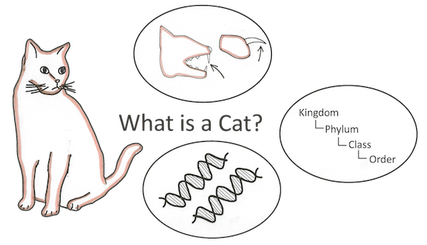 cat-analogy-20121004-170549