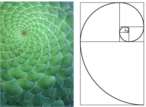 Intuition For The Golden Ratio