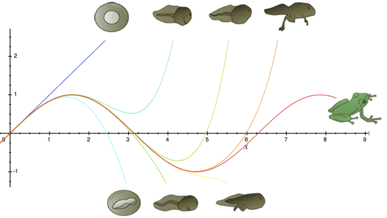 Intuition for Taylor Series (DNA Analogy)